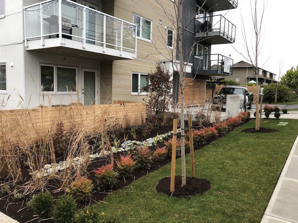 Landcape Victoria, new home in oak bay